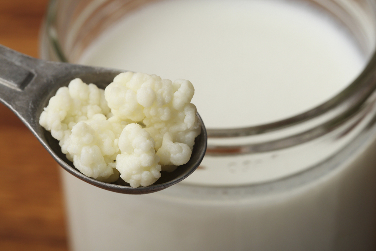 A measuring spoon of milk kefir grains resting on a jar of homemade milk kefir, on a wood background